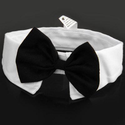 Bowknot modello gatto del cane Pet Bow Tie colletto accessorio collare