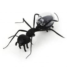 Solar Powered Ant