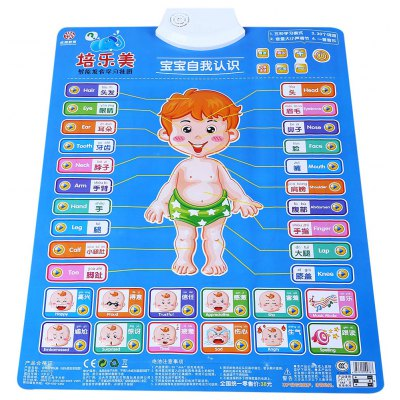 Baby Bump Sound Wall Charts Intelligent Toy