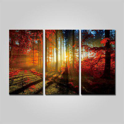 Buy COLORMIX JOY ART Mangrove Forest Print Framed Canvas Painting 3PCS for $44.23 in GearBest store
