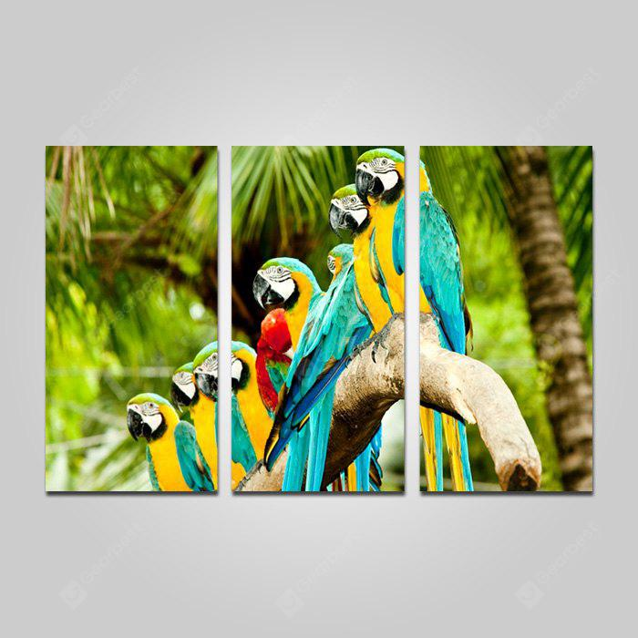 COLORMIX JOY ART Parrot Print Framed Canvas Painting 3PCS
