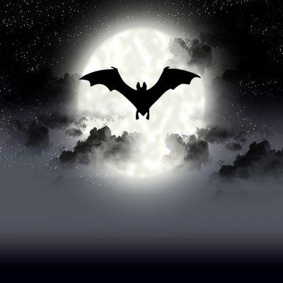 Halloween Scary Bat Night Photography Background Cloth