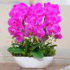 Artificial Silk Flower Eternal Simulation Butterfly Orchid 1PC - ROSE RED