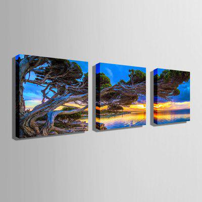 E - HOME Canvas Prints Tree Hanging Wall Art 3PCSPrints<br>E - HOME Canvas Prints Tree Hanging Wall Art 3PCS<br><br>Brand: E-HOME<br>Craft: Print<br>Form: Three Panels<br>Material: Canvas<br>Package Contents: 3 x Print<br>Package size (L x W x H): 90.00 x 5.00 x 5.00 cm / 35.43 x 1.97 x 1.97 inches<br>Package weight: 0.9000 kg<br>Painting: Without Inner Frame<br>Product size (L x W x H): 80.00 x 80.00 x 0.20 cm / 31.5 x 31.5 x 0.08 inches<br>Product weight: 0.5400 kg<br>Shape: Square<br>Style: Modern<br>Subjects: Landscape<br>Suitable Space: Living Room