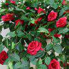 Buy 1 Bouquet Rose Wall Mounted Artificial Flower Home Decoration - 90CM RED