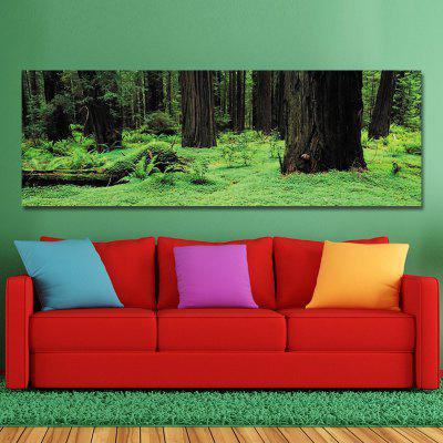 DYC 10497 Photography Shadow Green Forest Print Art