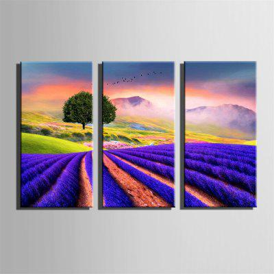 Special Design Frame Paintings Field Print 3PCSPrints<br>Special Design Frame Paintings Field Print 3PCS<br><br>Craft: Print<br>Form: Three Panels<br>Material: Canvas<br>Package Contents: 3 x Print<br>Package size (L x W x H): 52.00 x 73.00 x 5.00 cm / 20.47 x 28.74 x 1.97 inches<br>Package weight: 1.6000 kg<br>Painting: Include Inner Frame<br>Product size (L x W x H): 50.00 x 70.00 x 1.50 cm / 19.69 x 27.56 x 0.59 inches<br>Product weight: 1.5000 kg<br>Shape: Vertical Panoramic<br>Style: Vintage, Fashion, Active, Formal, Casual, Novelty<br>Subjects: Fashion<br>Suitable Space: Indoor,Outdoor,Cafes,Kids Room,Kids Room,Study Room / Office