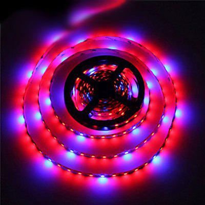 ZDM 5M 70W 5050 RED and Blue / Group LED Plant Grow Strip Light DC12V