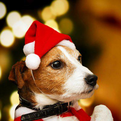 Haobei 19 Years New Christmas Decoration Supplies Pet Christmas Hat Dog Small Hat High-grade Plush Hat