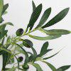 Artificial Olive Branch Plants 1pc - DARK FOREST GREEN