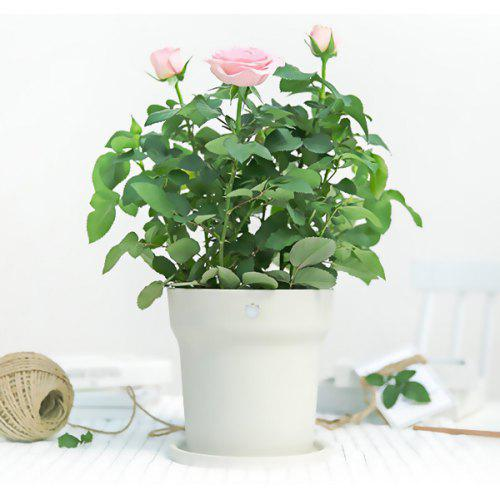 Xiaomi Youpin Flower Vase Monitore