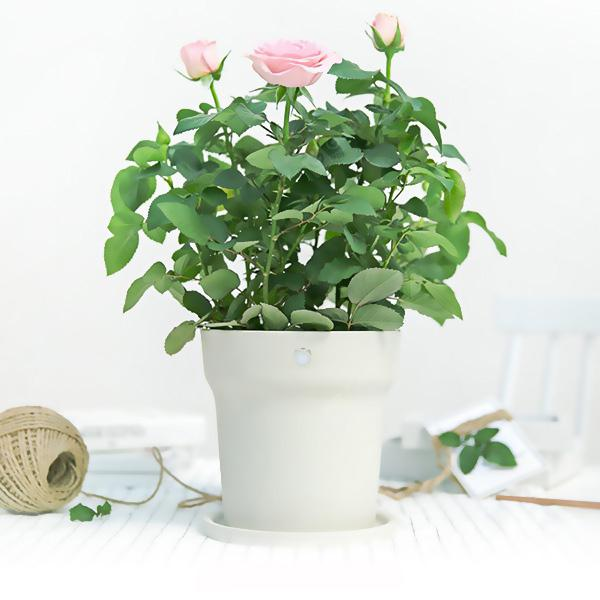 Xiaomi Youpin Flower Pot Monitor - WHITE