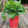 M11 Red Creative Environmentally Friendly Resin Green Plant Pot - CHESTNUT RED