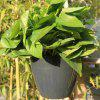 Large  Size Automatic Water Lazy Flower Pot with Planting Basket Water-absorbing Cotton Rope Hook - CARBON GRAY