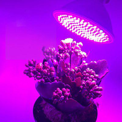 E27 Indoor Plant Growth LED Licht