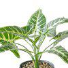 Taro Plant Potted Plants Green Leaves Home Decoration - GREEN APPLE