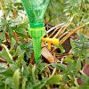 Automatic Valve Control Water Seepage Device Gardening Tool 8pcs - MULTI-A