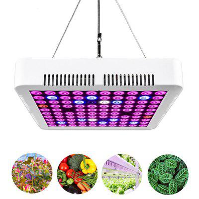 300W Full Spectrum LED Plant Growth Lamp for Indoor Hydroponic / Fruit Plants and Flowers