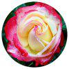 Lovely Roses Printed Coral Fleece Carpet Round Home Decor Round Mat - SUN YELLOW