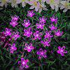 Solar String Light Double Function Lights Waterproof Christmas Holiday Decoration Lampen - 4,8 METER SOLAR 20 KOP PICK PINK