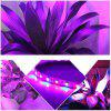 ZDM 5M Waterproof 70W 5050  RED and Blue / Group LED Plant Light Strip DC12V - RED+BLUE