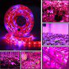 5M LED Phyto Lamps Full Spectrum Strip Light 300 LEDs 5050 Chip Fitolampy Grow Lights para invernadero Hydroponic DC12V - MULTICOLOR-A