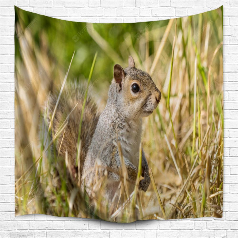 Squirrel 3D Printing Home Wall Hanging Tapestry for Decoration