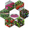 YWXLight 50W LED Plant Grow Lights 250 LEDs Indoor Red Blue Spectrum Blüte - MULTI