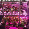 10W LED COB Grow Light Chip DIY with AC100-265V Power Supply for Indoor Plant - MULTI-A