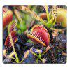 Cool   Rubber Beautiful  Multicolor   Gaming   Square  Mouse Pad - MULTI